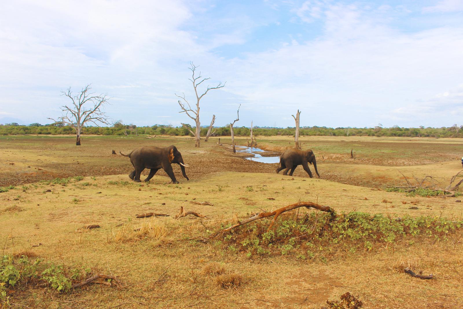 Udawalawe Sri Lanka